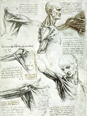 Estudios de anatomía de Leonardo da Vinci